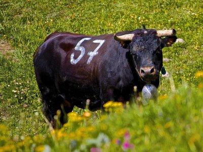 Inalpe de l'Alpage de Corbyre 2014